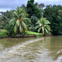 Rainforest Canal Cruising in Costa Rica
